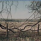 Earth Rope of Milano Texas - Land owned by Gene West by aaron a amyx