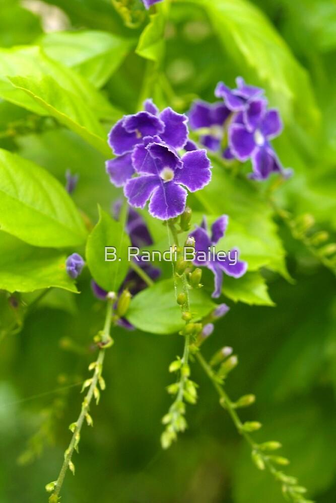 Little purple flowers by ♥⊱ B. Randi Bailey