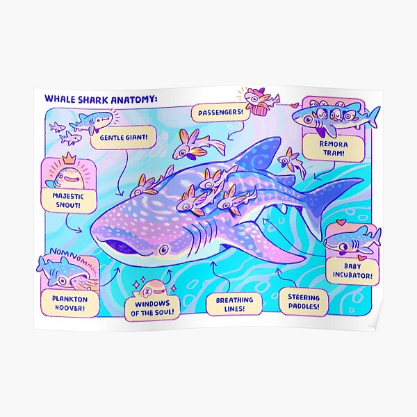 Whale Shark Anatomy Poster