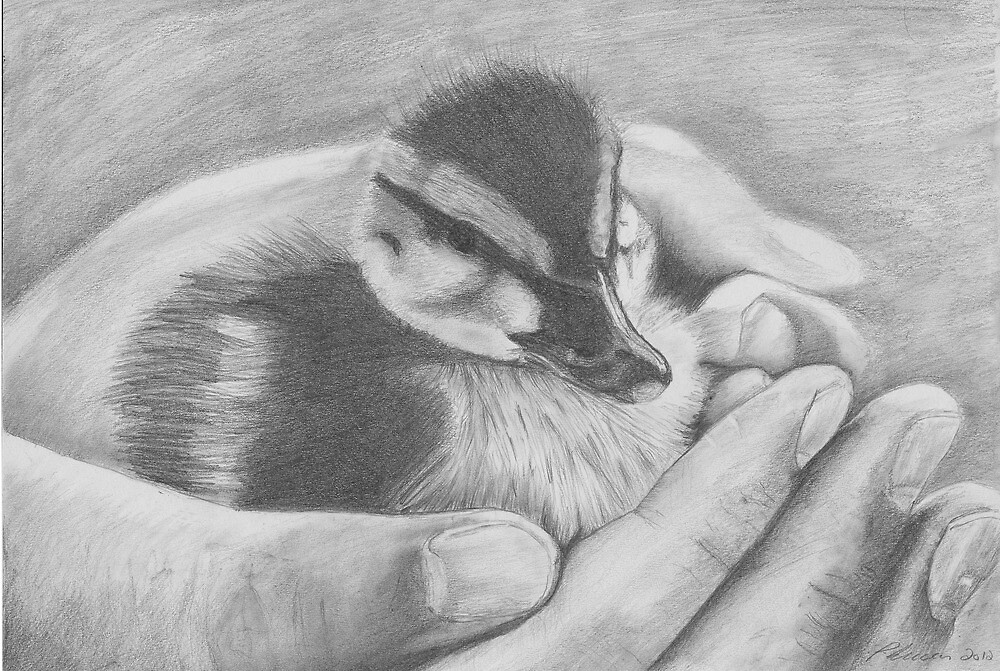 Duckling by Pat Lucas