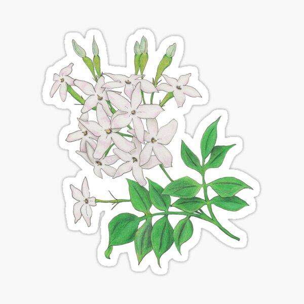 Jasminum officinale, mirrored Sticker