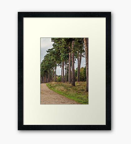 Pines Framed Print