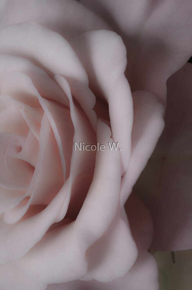 somewhat of a rose by Nicole W.