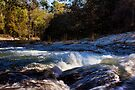 The River Wild by Carolyn  Fletcher