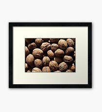 Walnuts Framed Print