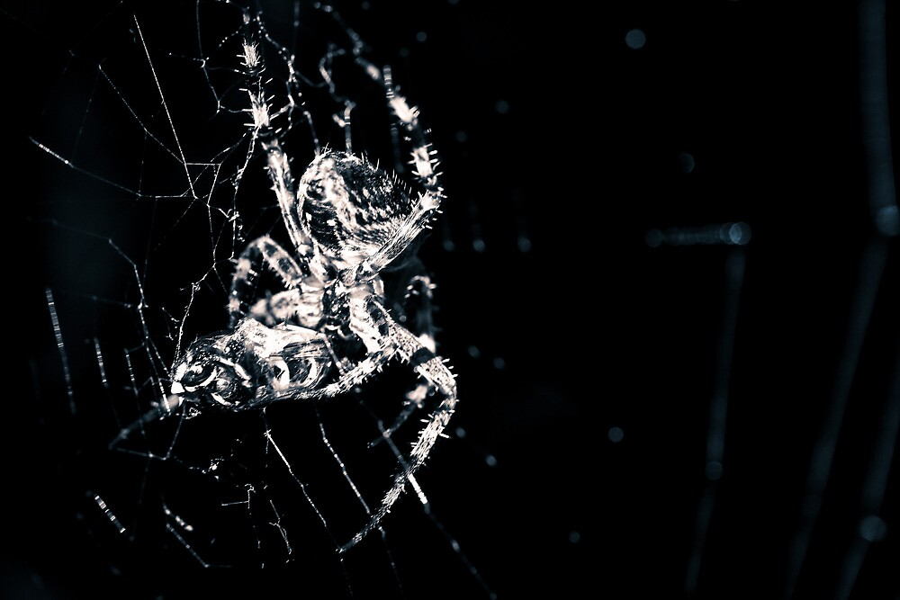 ...Said the Spider to the Fly by Chopen