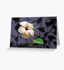 Hibiscus Shadows Greeting Card