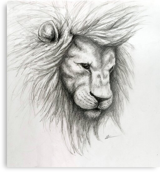Lion pencil sketch by molly lombard