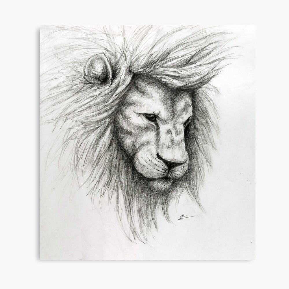 Lion pencil sketch canvas print