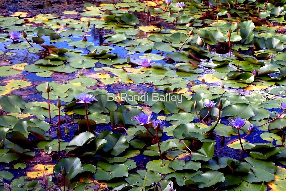 Many waterlilies by ♥⊱ B. Randi Bailey