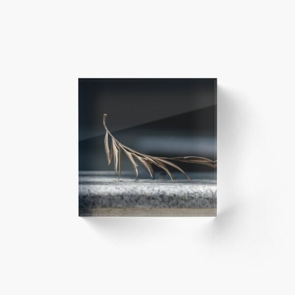 Minimalist photography of a dried leaf Acrylic Block