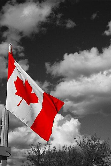 Canadian Flag by Tim Trott