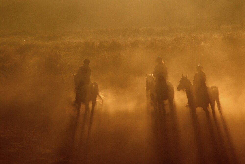 Riders in the Dawn by Trevor Farrell