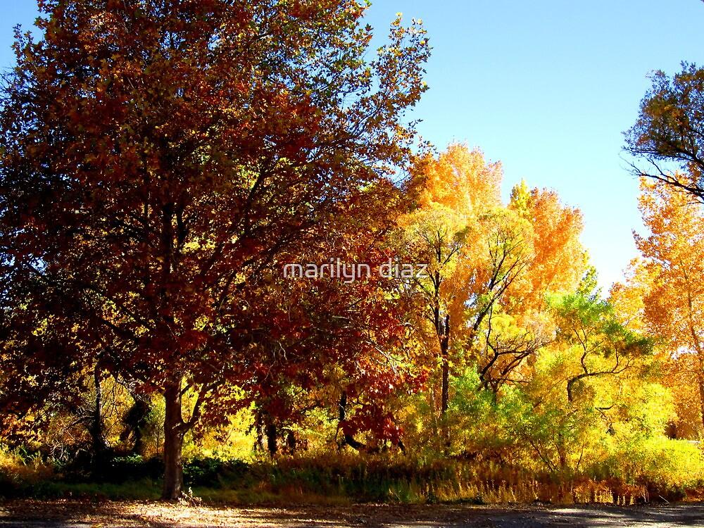 More Trees by marilyn diaz