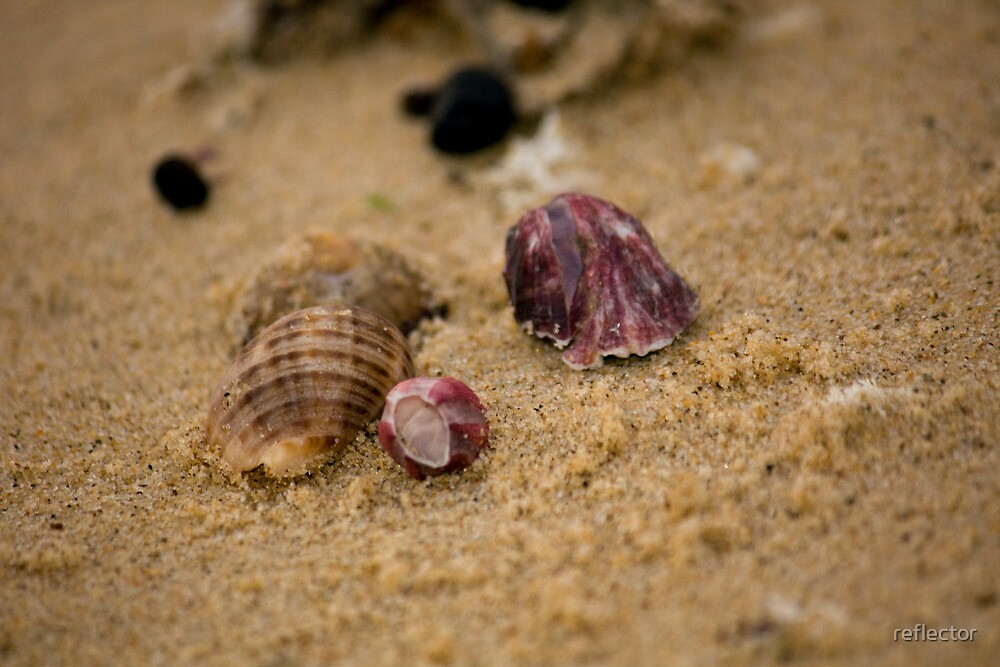 Trinkets On The Shore - Beachcomber Series by reflector