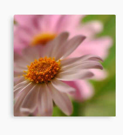 A Touch of Pink ~ Canvas Print
