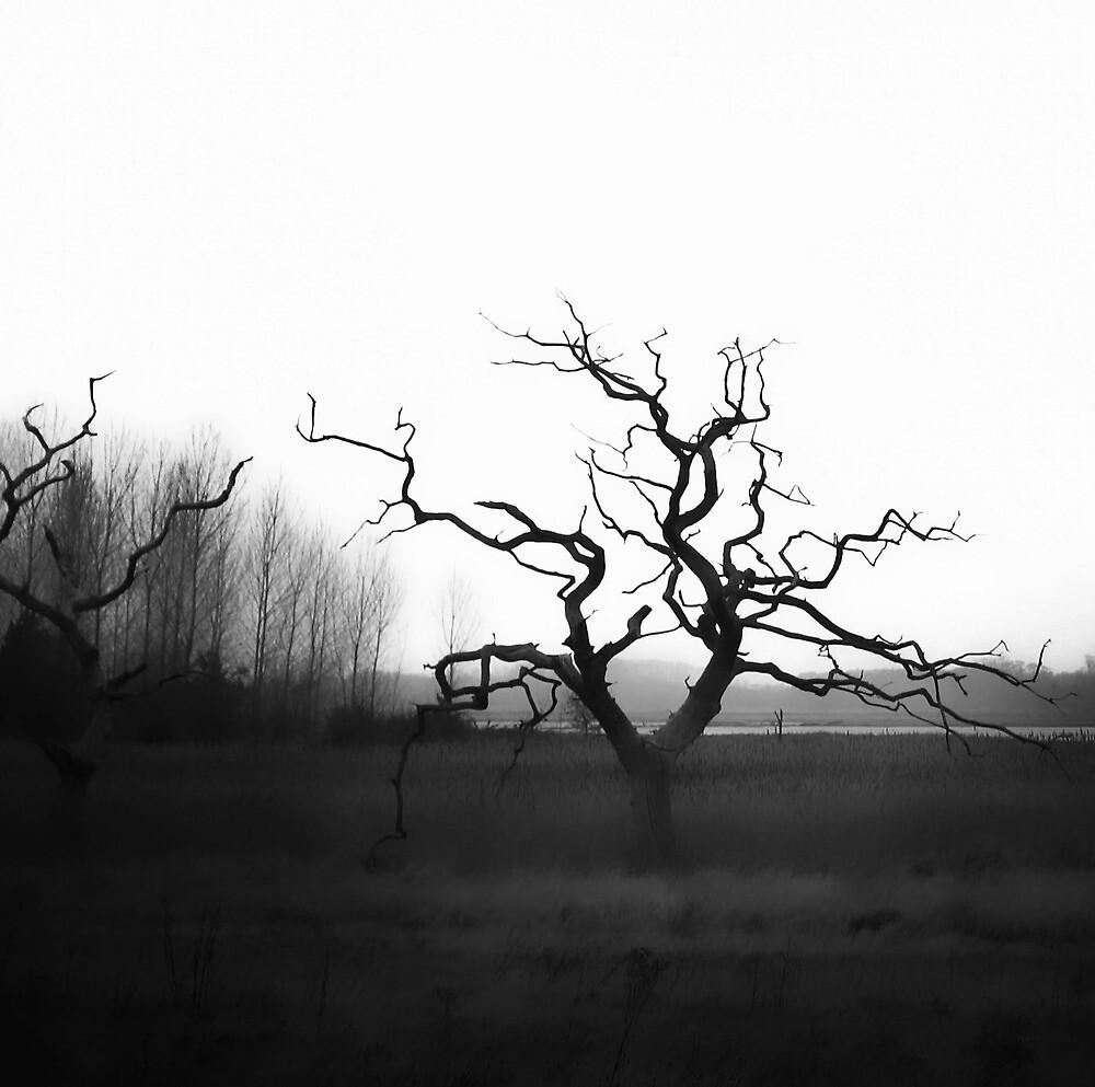 Warm The Dark  by JerryCordeiro
