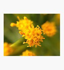 Macro on Flower Photographic Print