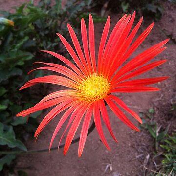 unbeautiful flower bedugu by pewegrafis