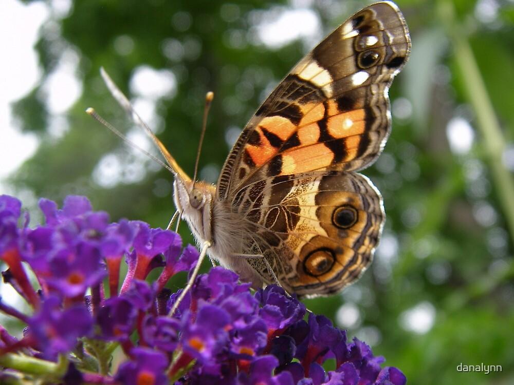 Butterfly on Butterfly Bush by danalynn