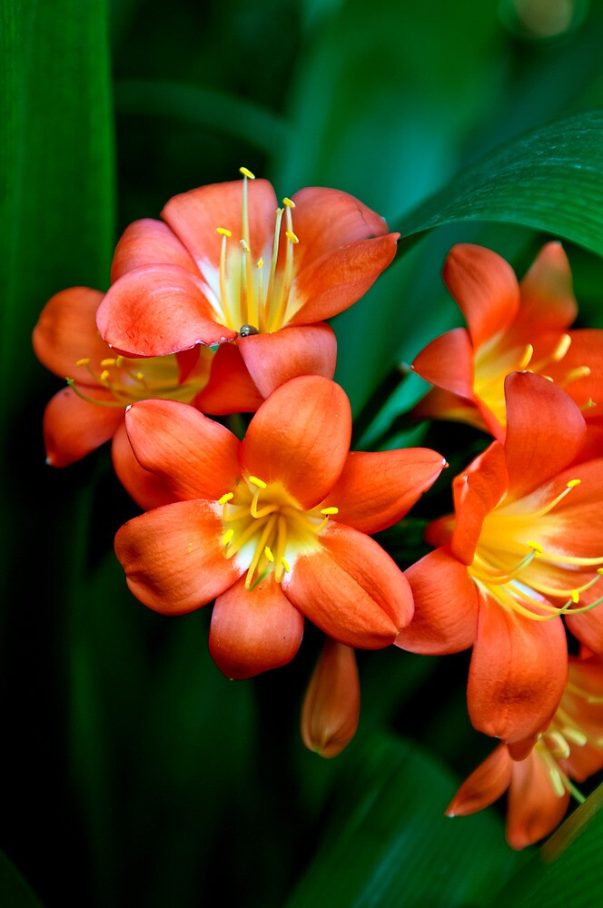 Tropical Flowers by abocNathan
