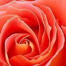 Rosy heart by mooksool