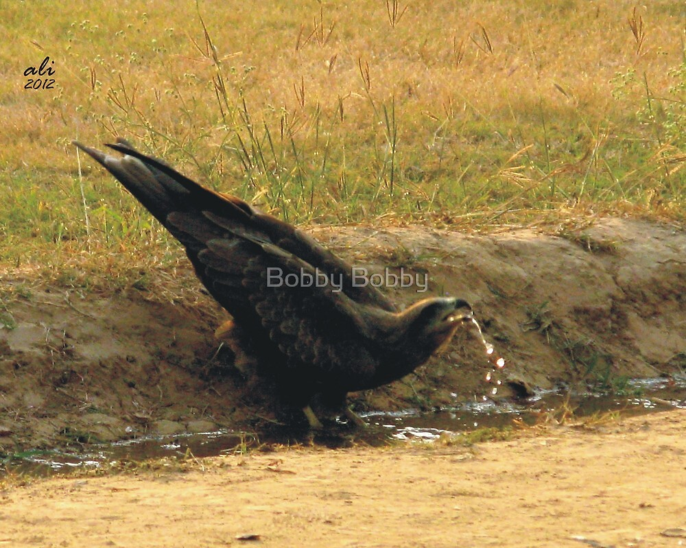 The Thirst by Bobby Dar