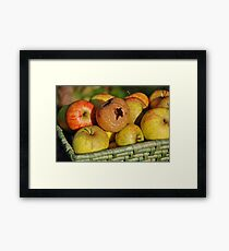Rotten apple in the basket Framed Print