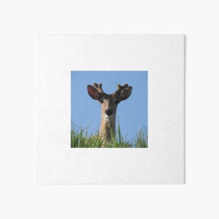 A Different Kind of Hide . . . and Seek Art Board Print