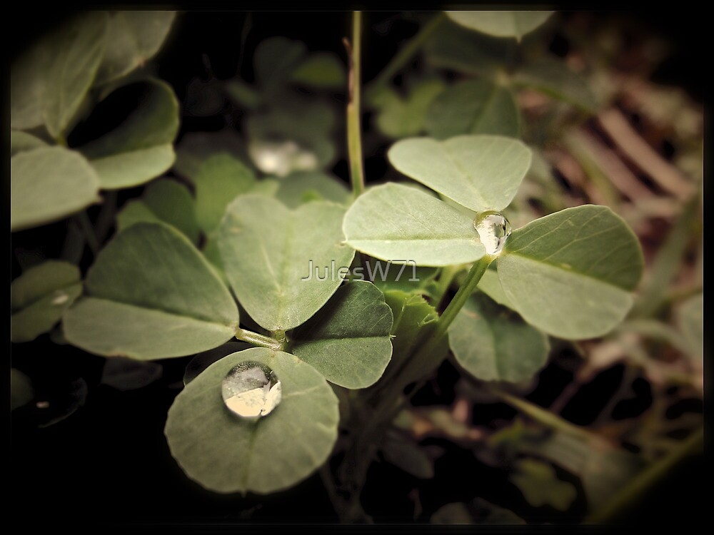 Clover by JulesW71