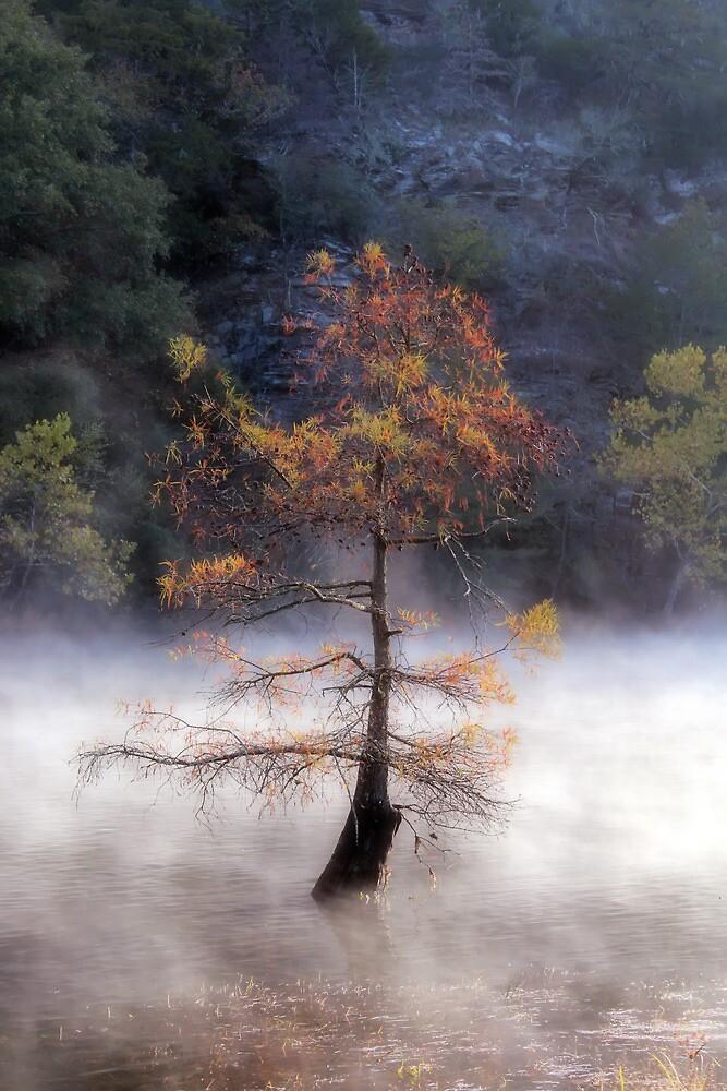 The Beauty Of A Misty Morning by Carolyn  Fletcher