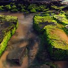 Green Moss at Turimetta Beach by kcy011