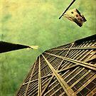 Falling Up by Andrew Paranavitana