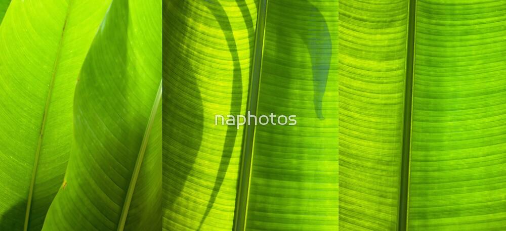 green leaf by naphotos