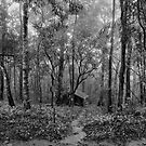 lonely hut in deep forest by naphotos