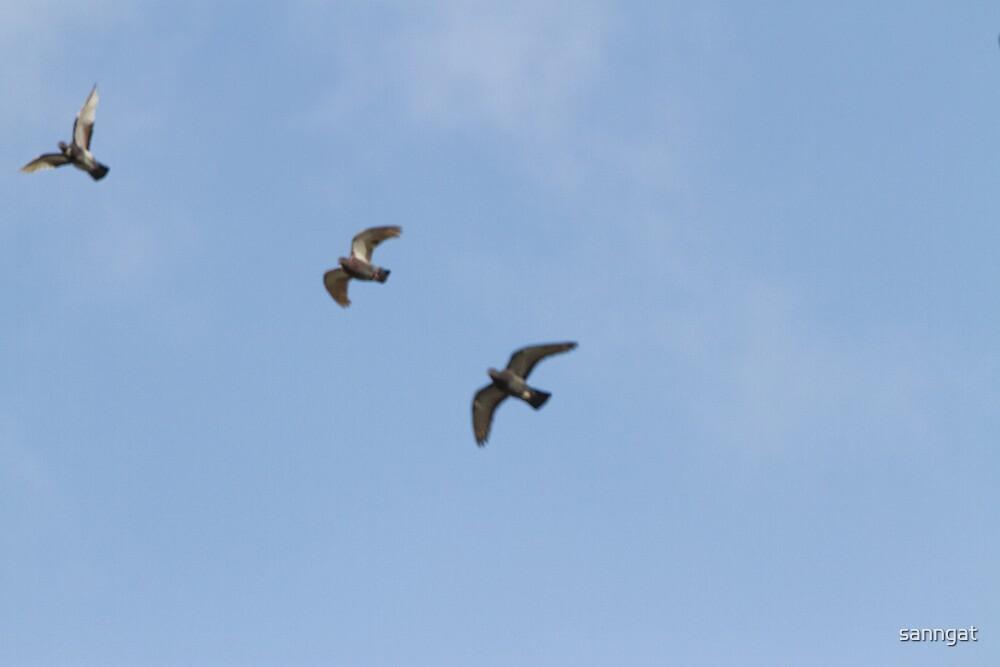 birds by sanngat