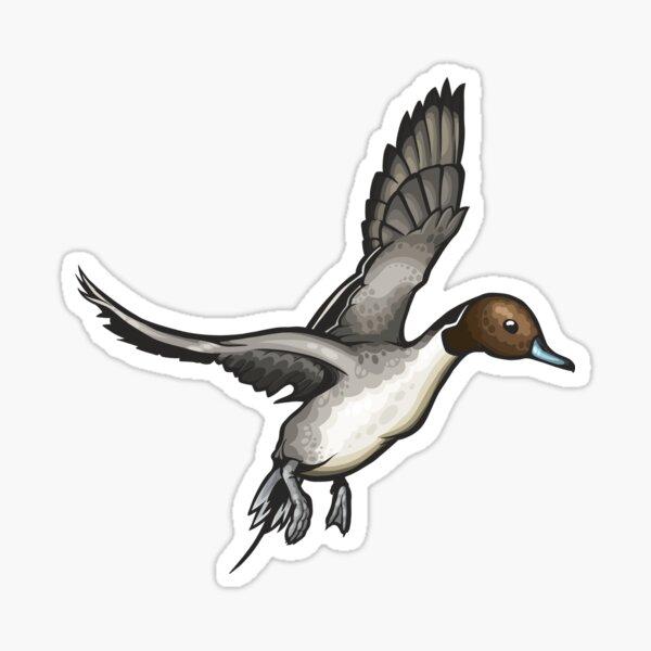Northern Pintail Sticker