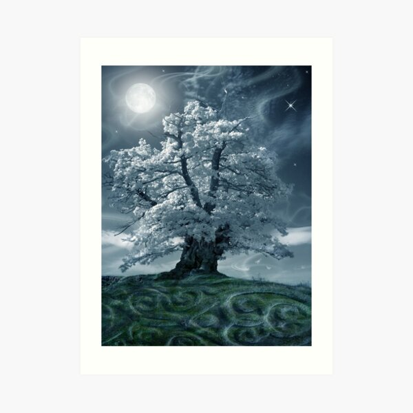 The White Leaved Oak Art Print