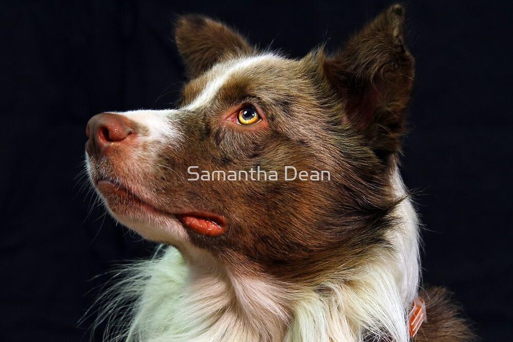 Sir Spudnick by Samantha Dean