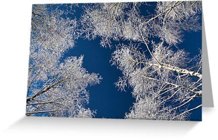 Winter at Bieszczady by Sylwester Zacheja