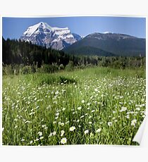 Meadow, Mt Robson, BC Poster