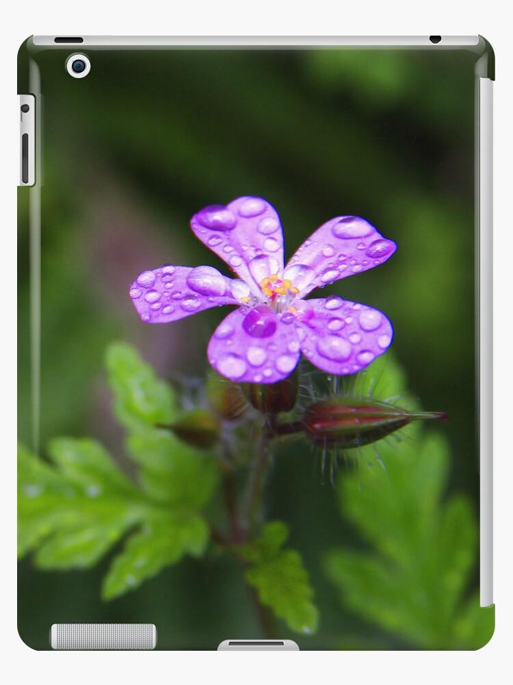 Purple Flower by Walter Quirtmair