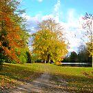 Autumn Colours pt2 by Lisa Williams