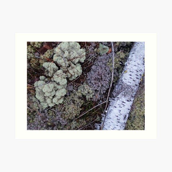 Silver and Lichen Art Print