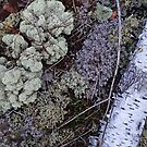 Silver and Lichen by Dawne Olson