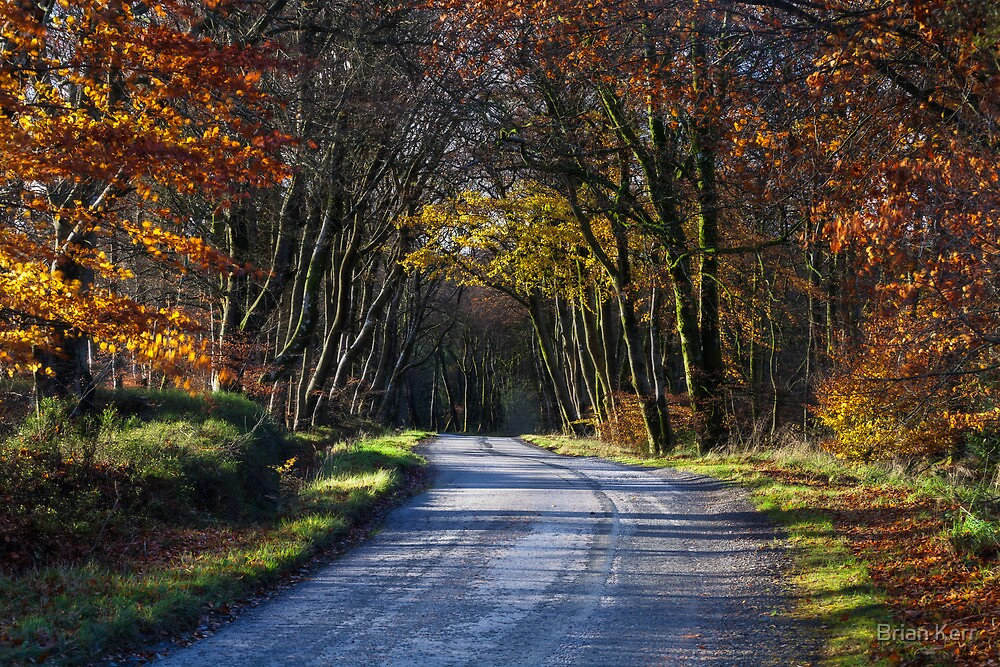 The Road To Autumn by Brian Kerr