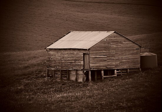 Shearing Shed by Dave Callaway