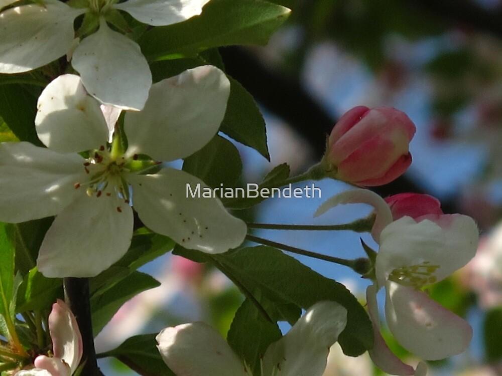soft spring by MarianBendeth