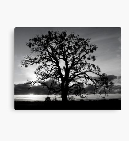 Lone Oak Silhouette Canvas Print