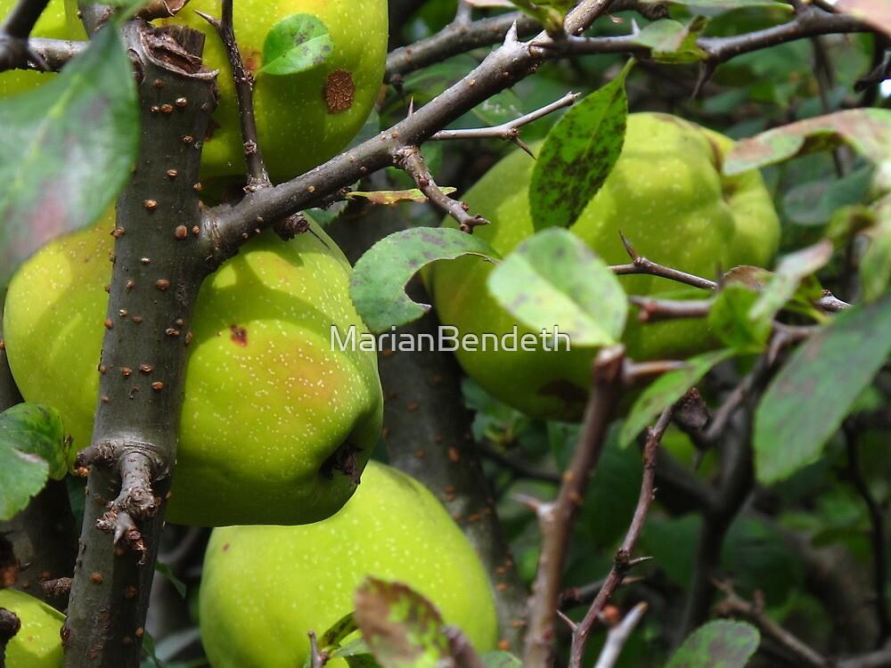 Tart Green Apples by MarianBendeth
